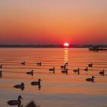 duck-automn-1